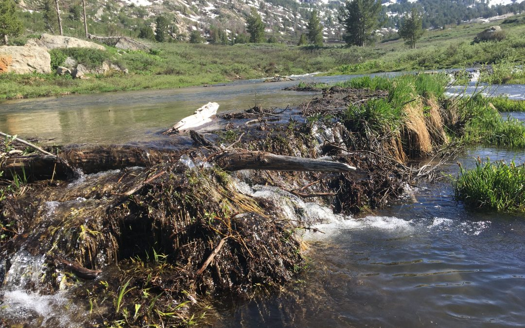 Ben Goldfarb Presents Lecture on Beavers at SteamPlant April 11
